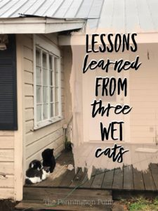 Life Lessons from Three Wet Cats